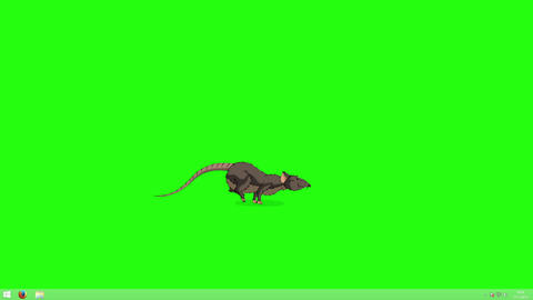 Brown rat jumps back and forth animation Chroma Key Animation
