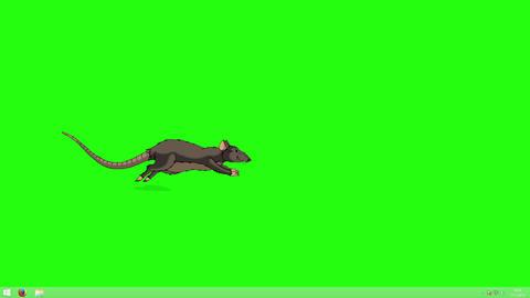 The brown rat runs animation Chroma Key Animation