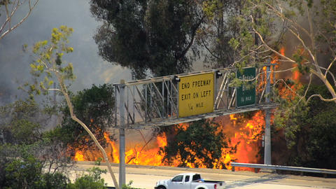Brush Fire Los Angeles Live Action