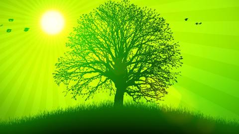 Animated Background Four Seasons Animation