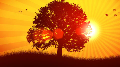 Tree and Sun Background Stock Video Footage