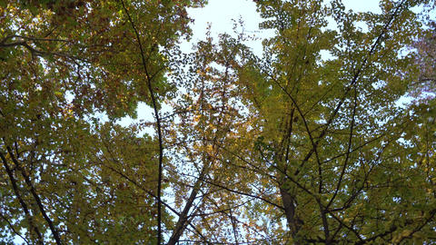 Autumn tree top Live Action
