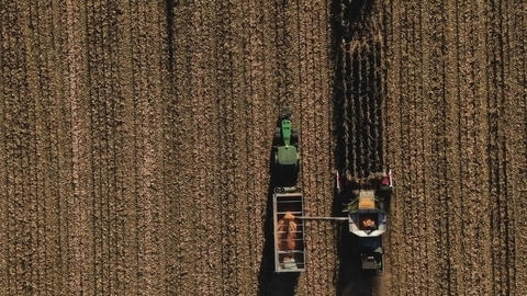 Aerial view of combine harvester harvesting ripe corn on harvest field Live Action