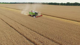 Flight over wheat rye field harvester aerial 4k video. Harvest agriculture farm Footage