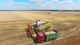 Combine harvester unloads grain farm vehicle truck. Harvest agriculture 4k video Footage