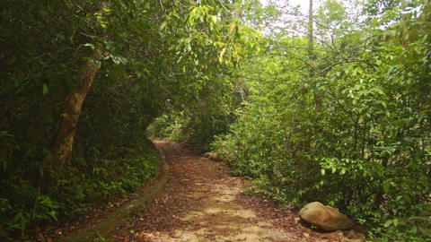 Shady Walkway in Thick Tropical Park Footage
