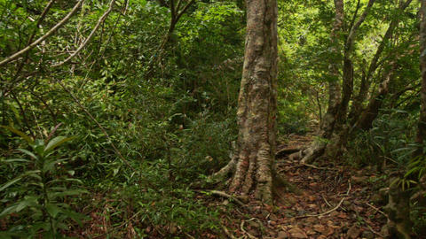 Shady Narrow Path in Thick Tropical Park Footage