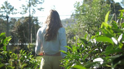 graceful woman walks among lush tea bushes slow motion Live Action