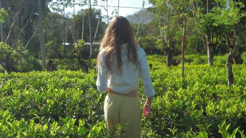 slim woman walks among green tea plantation slow motion Live Action