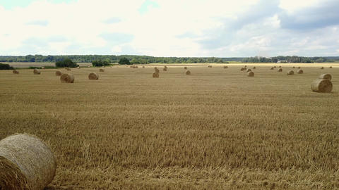 Field With Straw Bales Live Action