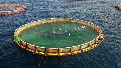 Sea fish farm. Cages for fish farming in mediterranean sea Live Action