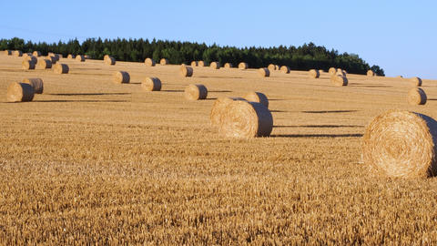 Hay bales on the field after harvest. Agricultural field. Hay bales in golden field landscape Live Action