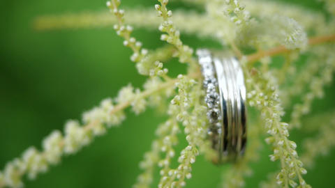 Silver wedding rings weigh on a green flower. Beautiful wedding rings weigh on Live Action