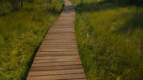 Ecological path through the swamp Live Action
