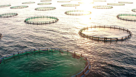 Sunset over sea fish farm in mediterranean sea Live Action