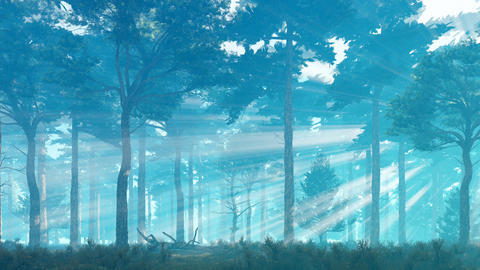 Misty sun rays in pine forest at dawn or dusk Footage