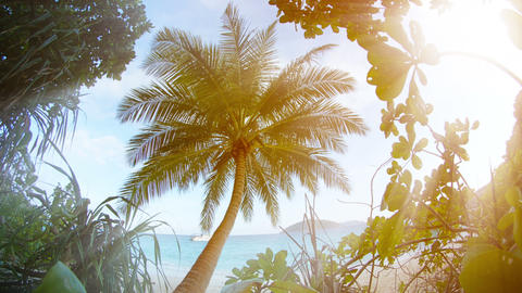 Solitary Coconut Palm near the Beach in Southern Thailand Footage