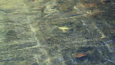 Religious symbols carved on stone at the bottom of the river. Cambodia. Phnom Ku ビデオ