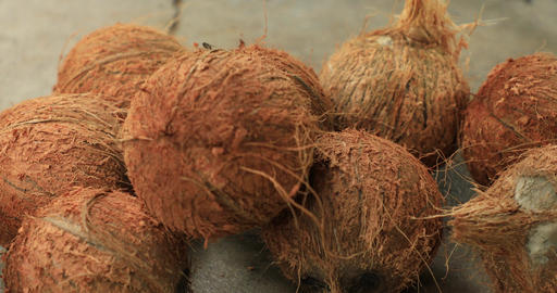 Closeup fresh brown coconuts on the ground Live Action