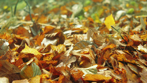 Close-up underwater shot of fallen autumn leaves on lake bottom Live Action