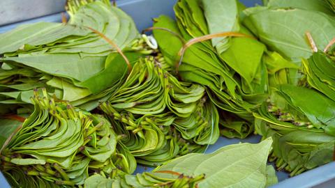 Betel Leaves Bundled for Sale at Market Live Action