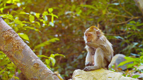 Cute Monkey Sits Contemplatively Footage