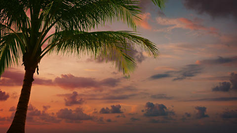 Tropical Palm Tree Backlit against a Sunset Sky Footage