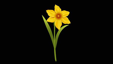 Narcissus y 2 2 Animation