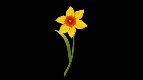 Narcissus yr 2 1 Animation