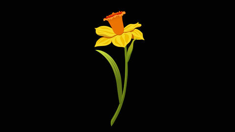 Narcissus yr 3 1 Animation