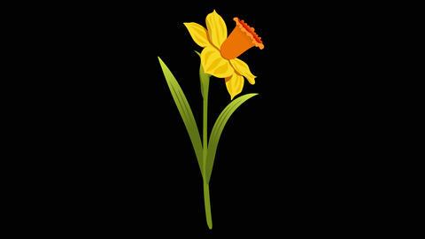 Narcissus yr 3 2 Animation