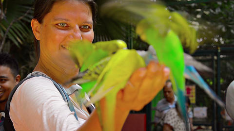 Flock of beautiful parakeets feasting on birdseed from a happy tourists hand at Footage