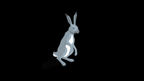 Gray Hare Sitting. Animation with Alpha Channel Animation