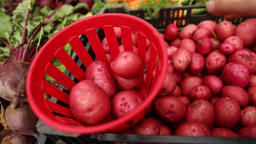 Fresh organic produce street market sale Live Action