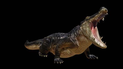 Crocodile GIF
