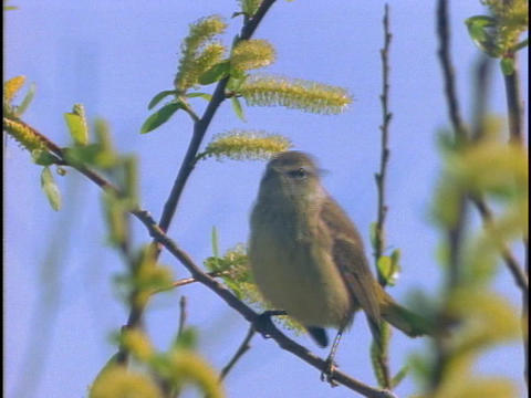 A bird perches on a twig Stock Video Footage