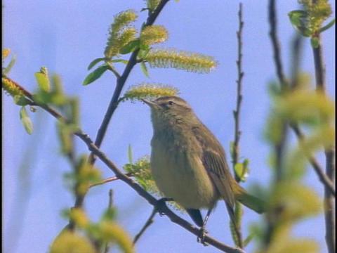 A bird perches on a twig Footage