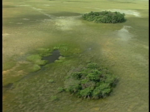 Clumps of trees dot the Florida Everglades Stock Video Footage