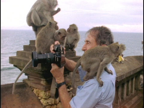 A monkey sits on a photographer at a Balinese temple Stock Video Footage