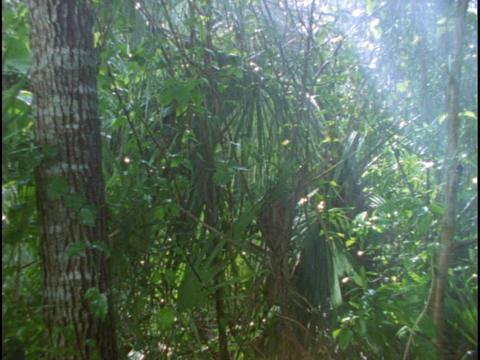 Rain falls in a rainforest Stock Video Footage