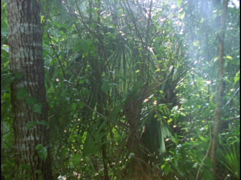 Rain falls in a rainforest Stock Video Footage