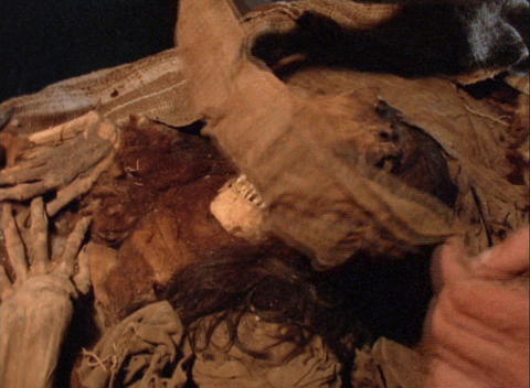 Close-up of a man uncovering a human skeleton in an... Stock Video Footage
