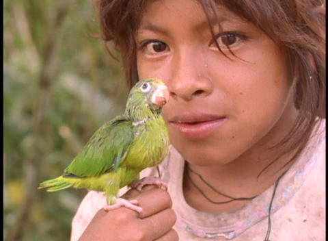 Close-up of a young girl holding a baby parrot in the... Stock Video Footage