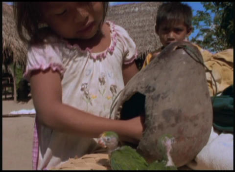 Following-shot of a little girl removing baby parrots from a nest to enjoy the warm sunshine Footage