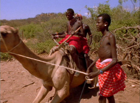 Masai tribesmen ride a camel in Africa Stock Video Footage