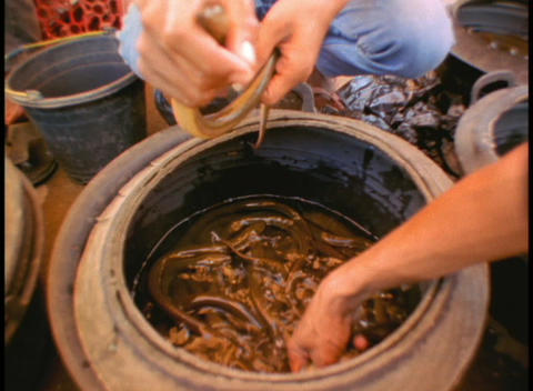 Natives in Indonesia remove snakes from a large pot in an... Stock Video Footage