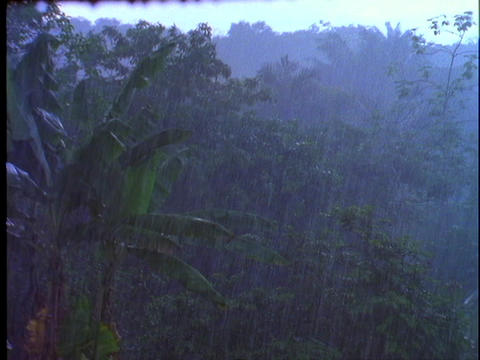 Rain falls in the Amazon rainforest in Brazil Stock Video Footage