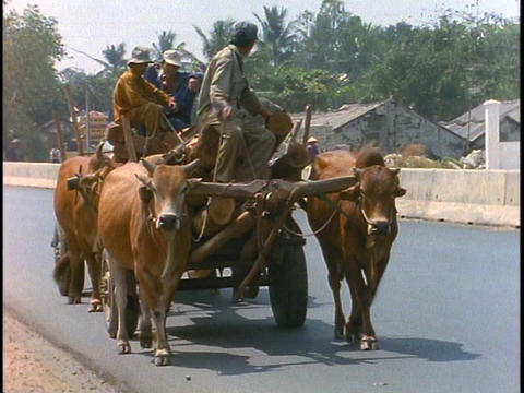 Oxen pull a cart in rural Vietnam Stock Video Footage