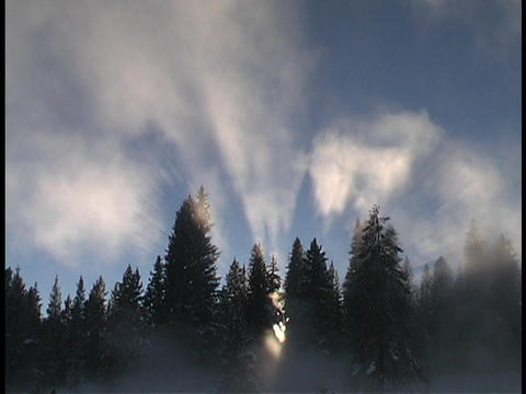 Sunshine shines above a forest Stock Video Footage
