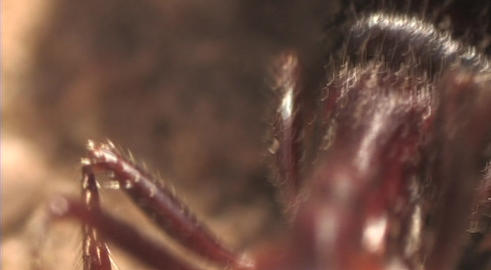 An extreme of an ant crawling Stock Video Footage